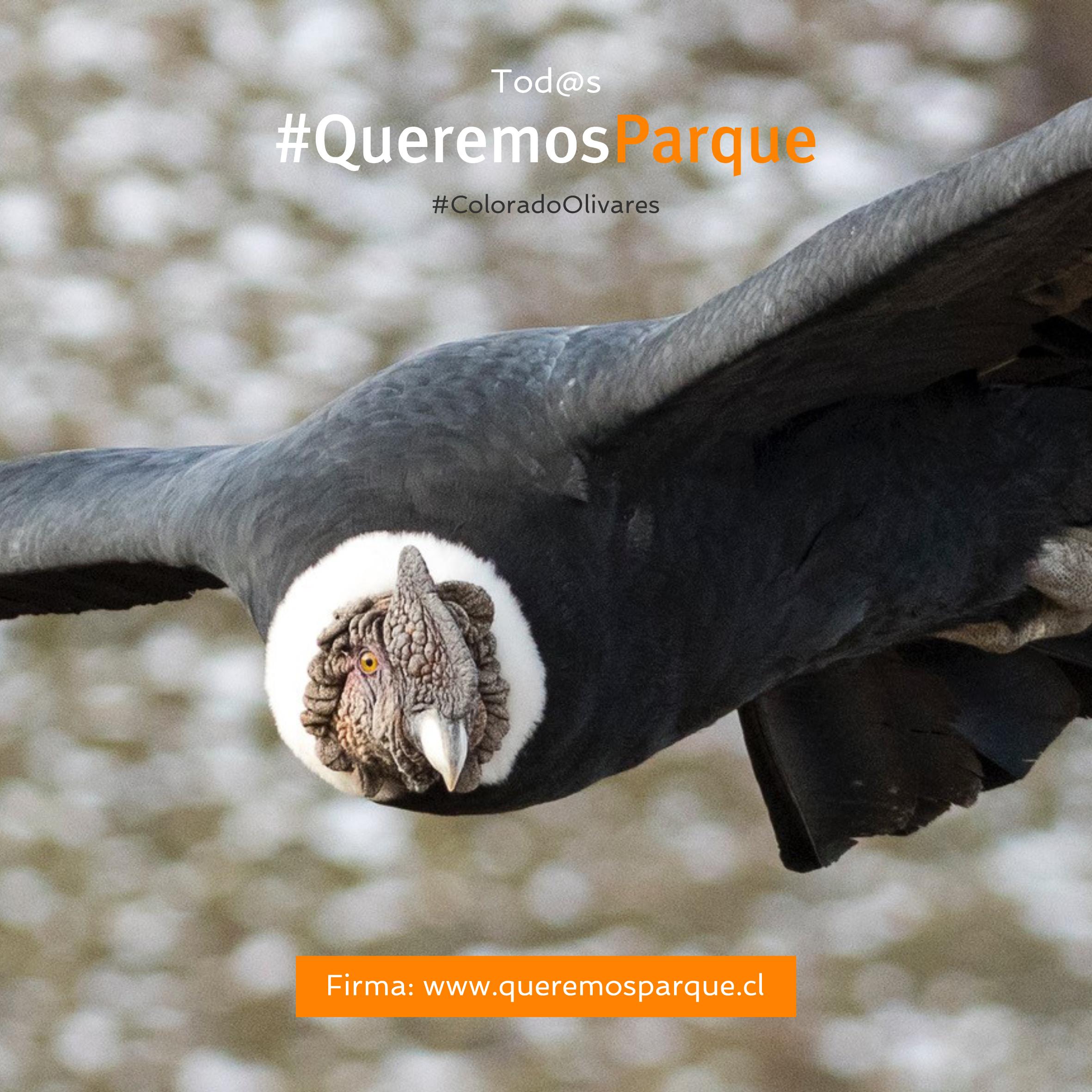 Condor QP